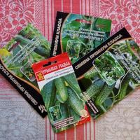 Подарочные суперхолодостойкие суперпучковые огурцы и схема формирования растений