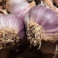 Выращивание чеснока через бульбочки: ошибки и работа над ошибками