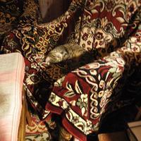 Конфликт между кошкой и рассадой