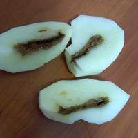 Что это за заболевание у картофеля?