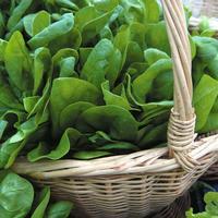 Почему считается, что шпинат полезен благодаря высокому содержанию железа