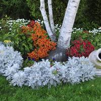 Как посадить и разместить самые красивые цветы в саду.