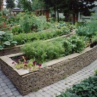 Топ-10 последних тенденций в садоводстве
