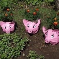Поселите поросят в своем саду