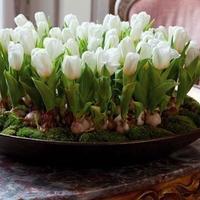 Домашняя клумба с тюльпанами