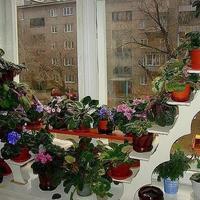 Удобные полочки для рассады и комнатных цветов