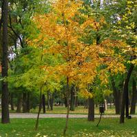 Прекрасная пора - осень