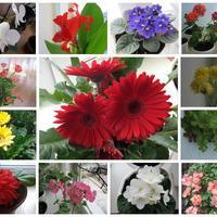 Вся красота в цветах.