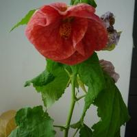Мой райский цветник)