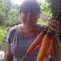 Как сохранить морковь холодной зимой?