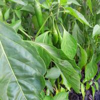 Как вы спасаете свои растения от тли?