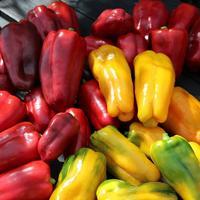 Урожай перца: генералы, фельдмаршалы и самородки моего огорода