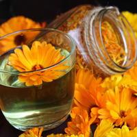 Золотые цветки здоровья — календула. Мое лекарство от фарингита и ангины