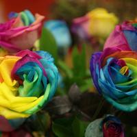 С 19 по 23 марта в Сан-Франциско пройдет цветочная выставка