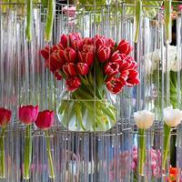 Открылась выставка по садоводству в Мельбурне, Австралия
