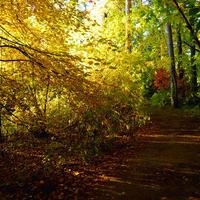 Осень-время ярких красок...