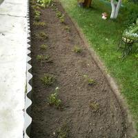 Нужно ли удалять листья у клубники после сбора урожая?