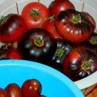 Мои помидоры-гиганты