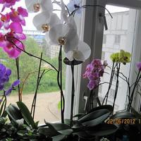 Моё цветочное окно )
