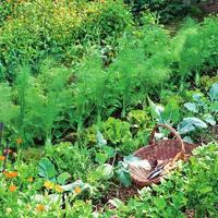 Как наиболее эффективно распределить грядки на огороде в 3 сотки?