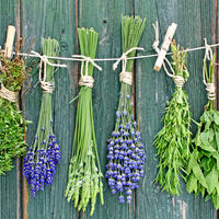 Какие лекарственные травы вы заготавливаете в августе? Поделитесь и подскажите)))