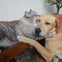 """Как у вас кошка с собакой живут - """"как кошка с собакой""""?"""