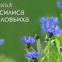 4 июня - Василиса Соловьиха. Что обещают нам приметы этого дня?