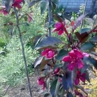 Яблоня - это не только несколько килограммов яблок, но ещё и сказочная красота!