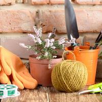 """Фотомарафон """"Seedspost.ru на моей даче и в моем доме"""""""