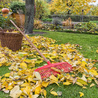 Что делать мне с листвой в саду? У вас ответы я найду?