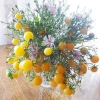 Компания LETTO подвела итоги тестирования семян цветов и овощей ТМ АГРОУСПЕХ!