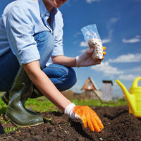 Объявляем набор группы тестирования семян овощей от Агрофирмы АЭЛИТА - 2019!