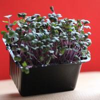 Насколько полезны растения с подоконника?