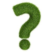 Посадила семена амаранта хвостатого. Взошел кучками по 3-4 стебелька. Нужно ли убирать лишние?