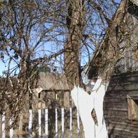 Помогите советом, что делать с заброшенным садом?