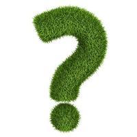 Подскажите, как правильно выращивать дихондру?