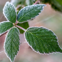 Как помочь растениям после заморозка