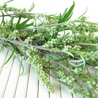 Мифическая полынь. Сорняк или полезное растение?