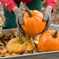 Хранение тыквы зимой. Сбор и подготовка плодов