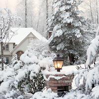 Как добавить красок зимнему саду