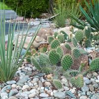 Аренарий: уголок пустыни в вашем саду