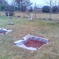 Осенью подготовили ямы для посадки высокорослой черники в центре, а по краю для клюквы. Можно ли их совместить?