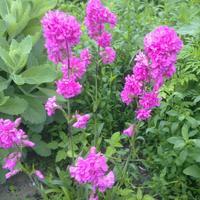 Как называется растение и как его размножить?