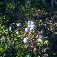 В этом году одолели грибы на огороде. Что можно сделать, чтобы от них избавиться?