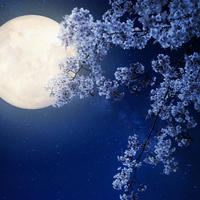 Лунный сад на даче