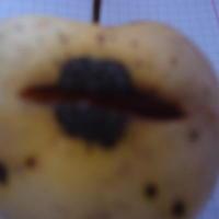 Скажите, чем заражены яблоки? И как лечить?