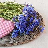Васильки голубые и не только: выращивание в саду