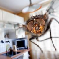 Весёлый тест: Бывает ли муха под мухой, или Проверьте, насколько хорошо вы знаете мух