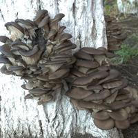 По грибы мы в лес ходили - на медведя угодили