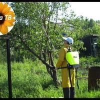 Как ухаживать за деревьями и кустами осенью? уДачное время. Дача ТВ
